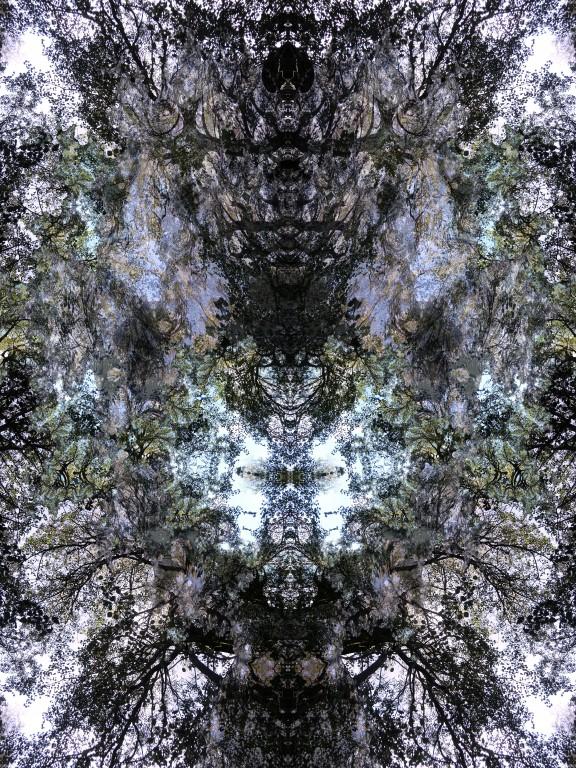 Sibelius Park - Metamorphosis - The Transition by K.Veijo